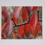 Just listed in the shop – Stunning Autumn Leaf Canvas prints