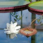 Adelaide Botanic Gardens adventure