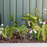 Greening up the backyard