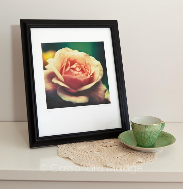 Peach Rose Fine Art Print Limited Edition