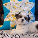 Kids project – Simple Star Cushion