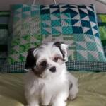 Seabreeze Mini Pillow revealed!